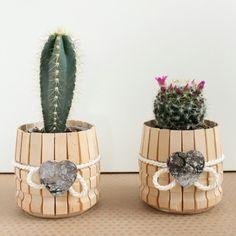 Vasetto con pianta grassa riciclando le mollette