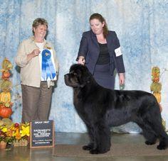 DOG SHOW POOP: FIRST TIME BIS GETS BIG POINTS