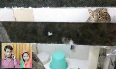 Honeymooners woken by leopard breaking into their hotel room #DailyMail