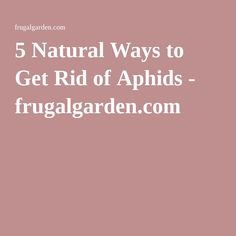 5 Natural Ways to Get Rid of Aphids - frugalgarden.com