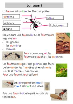 During this period, my students worked on the theme of disability (p . Read In French, French Class, French Lessons, Learn French, Insect Activities, Preschool Activities, Teaching Reading, Teaching Tools, Kindergarten Inquiry