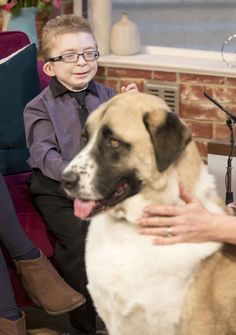 Haatchi changed the life of his best friend, who suffers from Schwartz-Jampel Syndrome