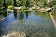 10 ideas de piscinas naturales y sostenibles   Disfrutar de tu tiempo libre es facilisimo.com