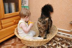 Dogs get a lot of love as awesome family pets, but don't write cats off. When they are not planning world domination, cats can be wonderful purring companions for children. Cute Kittens, Baby Kittens, Baby Dogs, So Cute Baby, Cute Babies, Animals For Kids, Animals And Pets, Cute Animals, Photo Chat