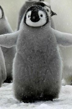 Pingvin i vinterskrud. ペンギン (jp) Pinguin (de) penguin (en) 펭귄 새 (kr) manchot (fr) pinguino (it) pingvin (se) pinguim (pt)葡 pingüino (es)西 pinguïn (nl)荷