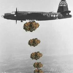 DROP BUDS NOT BOMBS! 'Cause nobody ever got attatcked by a stoner....