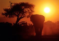 Amarula gives back to the elephants through the Amarula Trust. So you never have to imagine an African sunset without an elephant in the background. For more beautiful sunsets with elephants, visit www.greatestsunsets.com