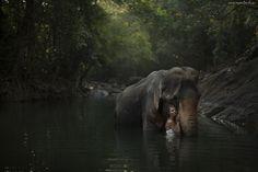 Słoń, Kobieta, Staw, Las