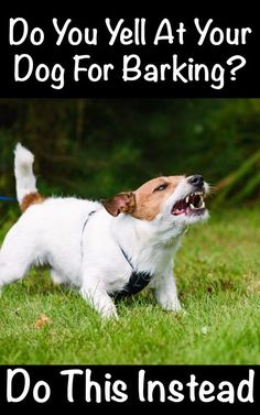 Try this innovative anti-barking technique to get your dog to instantly stop barking and listen. Animals And Pets, Funny Animals, Cute Animals, Stop Dog Barking, Dog Potty, Dog Behavior, Dog Care, Dog Training, Training Classes