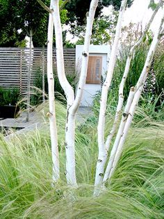 front yard landscape bioswale birch trees - Google Search