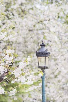 White Cherry Blossom, Cherry Blossoms, Paris In Spring, Spring City, Tuileries Paris, White Cherries, Paris Photography, Summer Photography, Travel Photography