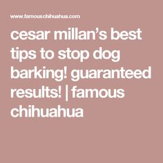cesar millan's best tips to stop dog barking! guaranteed results! | famous chihuahua