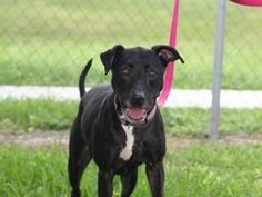 Adoptable Pets---Palm Beach County---Click on picture to see more pictures etc