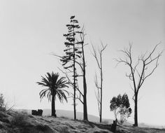 Edge of San Timoteo Canyon, Redlands, California, Photograph by Robert Adams. Monochrome Photography, Black And White Photography, Robert Adams Photography, Redlands California, Wind Break, San Bernardino County, San Francisco Museums, Sun And Water, Gelatin Silver Print