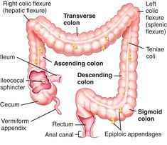 Full Size Picture colon.jpg