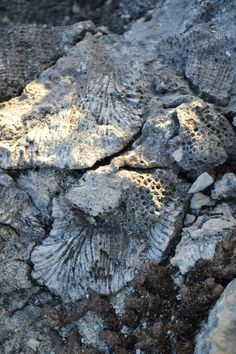 Coral formations in the rocks of the Negril cliffs. #visitjamaica