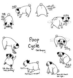 Bah Humpug: Pug Poop Cycle
