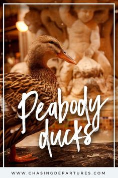 Checking In to The Historic Peabody Hotel Luxury Travel, Travel Usa, Peabody Hotel, South Usa, Rooftop Party, Great Vacations, Above And Beyond, Grand Hotel, During The Summer