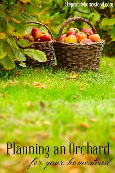 super practical tips for planning an orchard on your homestead or property