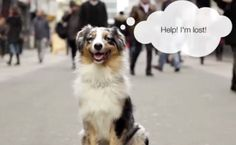 Animal Shelters Go High Tech to Identify Lost Dogs http://www.care2.com/causes/animal-shelters-go-high-tech-to-identify-lost-dogs.html
