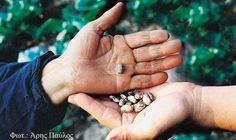 Δωρεάν διανομή σπόρων από το Πελίτι στο Βίος Coop