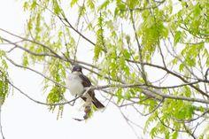 Taken on a bike ride around Argyle Lake near Colchester Illinois. This curious little bird was keeping a close eye on me.