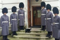 The Diplomog was welcomed to his Whitehall home by six burly Grenadier Guards in formation