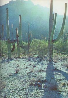 cacti around the corner of the surrendering sun