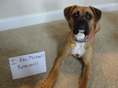 I ate Michael's Retainers http://www.dogshaming.com/2013/01/i-ate-michaels-retainers/