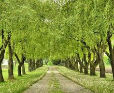 Image result for tree lined driveway