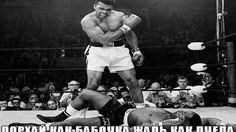 Muhammad Ali best knockouts