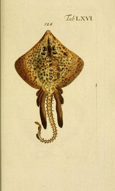 Abbildung und Beschreibung der Fische / - Biodiversity Heritage Library