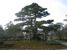 Kenroku-en  #japan #garden