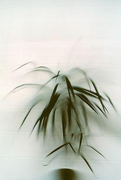 пальма by mademuaselle