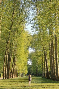 This corridor of trees at Versailles is breathtaking, as are the gardens, grounds and fountains