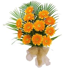 """A gift that will convey what ever meaning you wish your loved one along with one timeless message ? """"I care about you.""""   This bunch contains 12 Orange Gerberas  for more outstanding gift and hampers log on to www.goenkaflorist.com"""