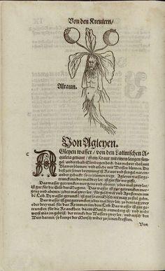 Mandragora, [Alraun] 1551, Hieronimus Braunschweig, Distillerbuch,  P.61, Polska Biblioteka Internetowa,
