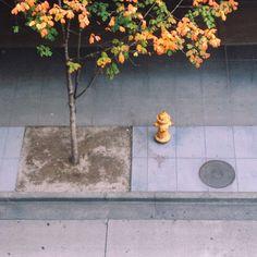 #fall #yellow photo by happymundane on Instagram