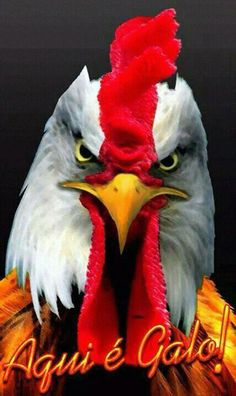 AQUI É GALO! Tatoos, Rooster, Marvel, Bird, Wallpaper, Animals, Lamborghini, Football Squads, Christ Tattoo
