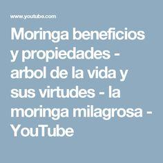Moringa beneficios y propiedades - arbol de la vida y sus virtudes - la moringa milagrosa - YouTube