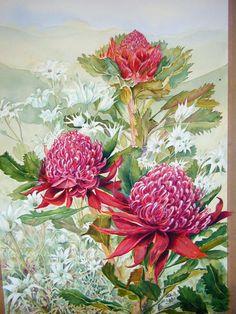 Waratahs Australian Wildflowers, Australian Flowers, Australian Animals, Australian Bush, Watercolor Flowers, Watercolor Paintings, Watercolours, Waratah Flower, Engraving Printing