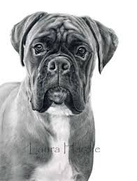 boxer drawings - Buscar con Google