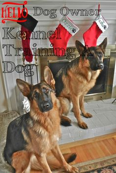 How To Get A Well Kennel Training A Dog *** Click image for more details. Kennel Training A Dog, Crate Training, Dog Training Tips, Stress And Anxiety, Dog Owners, Puppies, Dogs, Image, Doggies