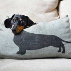 Dachshunds would be ideal dogs for small children...  they…
