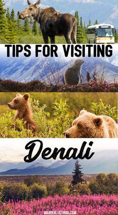 Visiting Denali National Park in Alaska? Tips for Denali National Park lodging, tours, & what to know before you visit Denali. #Alaska #Denali #Travel #USA