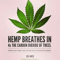 #Hemp is not just medicine, it is also great for the environment! #GoGreen with #AmericanGreen
