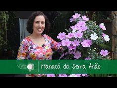 Manacá da Serra Anão: Como Cuidar/Glory bushes: Care Tips - A Menina do Dedo Verde - YouTube