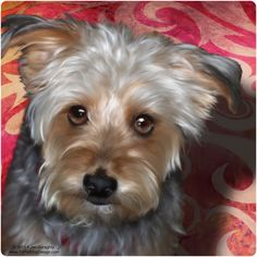 Custom pet portrait of Rascal the Yorkie terrier