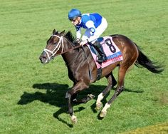 Robert Masterson's champion Tepin put on a show in her return to Keeneland April 16, 2016 sprinting away from the competition to easily win the $350,000 Coolmore Jenny Wiley Stakes (gr. IT) by five lengths.