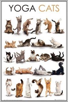 cats yoga